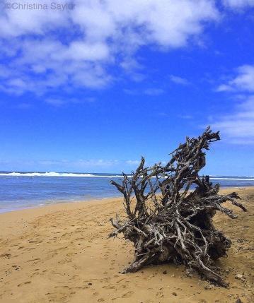 Art in nature the north shore of Kauai