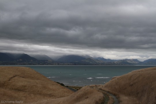 Paths to the sea on the Kaikoura Peninsula