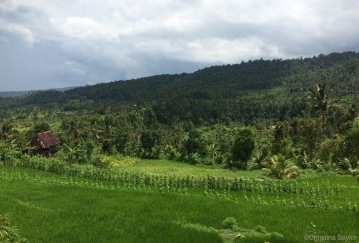 The lush countryside of the Munduk region on Bali