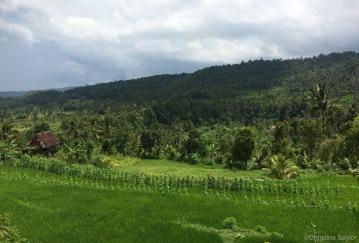 The lush countryside of the Munduk region on Bali