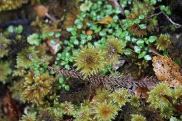 A close look at the flora of Punakaiki rainforest in Paparoa National Park