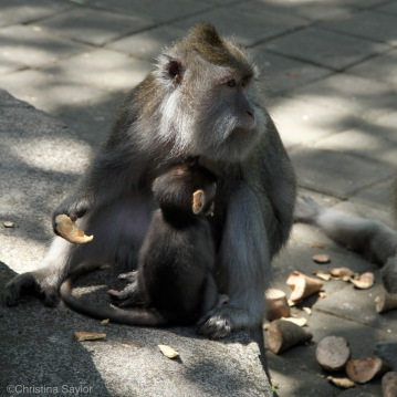 Mama and baby at the Ubud Monkey Forest on Bali