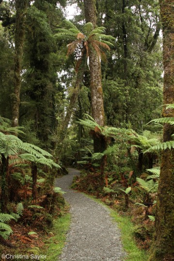 Exploring New Zealand's rain forests