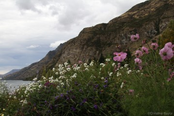 Wild flowers on the shore of Lake Wakatipu
