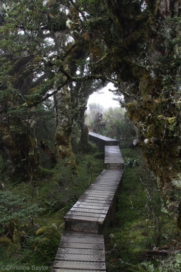 Into the woods along the Routeburn Track