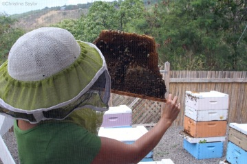 Bee keeper at Big Island Bees