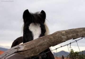 A curious horse near the start of a 5km coastal trail from San Sebastian to Pasaia