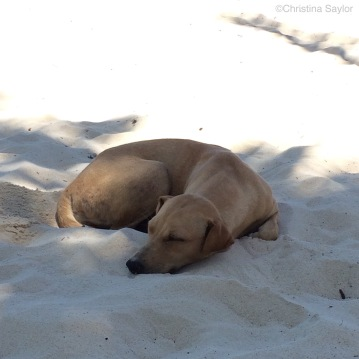 The dogs do it right... they dig a cool spot in the sand and nap in the shade