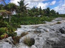 Iguana on the rocky walk to Yal Ku Lagoon
