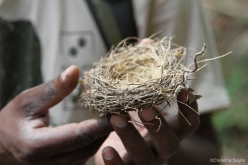 A lesson in birds' nests with the Sri Lanka Wildlife Conservation Society
