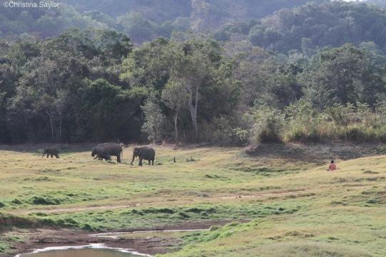 Observing elephants with the Sri Lanka Wildlife Conservation Society