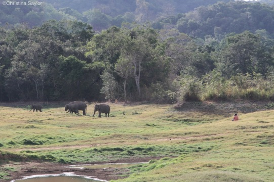 Observing elephants with the Sri Lanka Wildlife Conservation Society