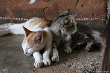 Kittens in the field house, Central Province