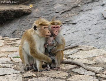 Monkey family at a temple