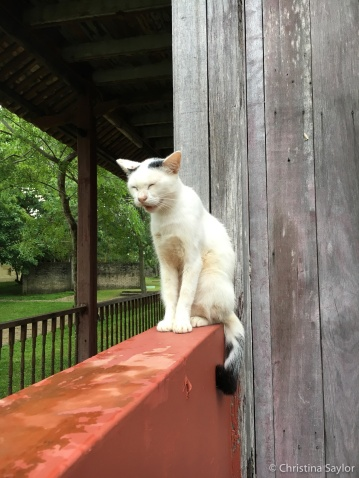 Kitty company at Bon Ton Resort, which helps rescue animals