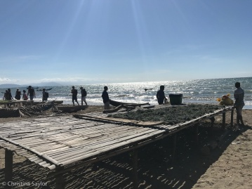 Seaweed cultivators near Biqueli village